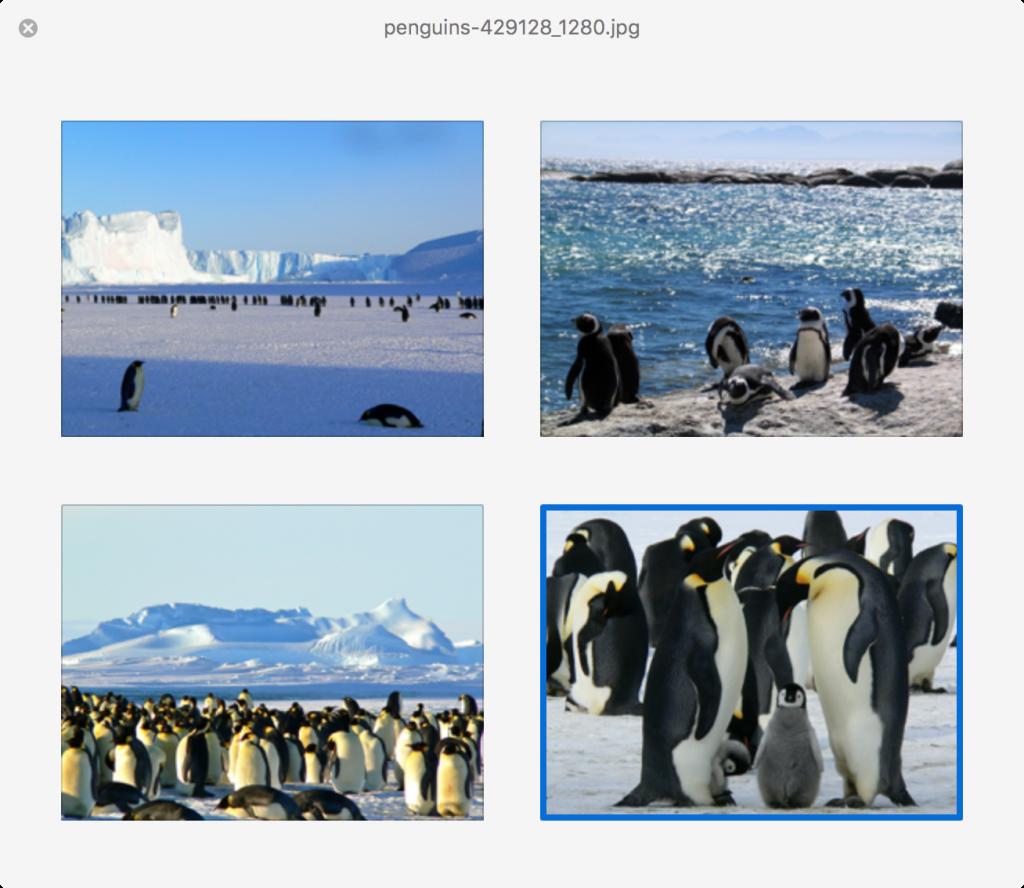 Quick-Look-penguins
